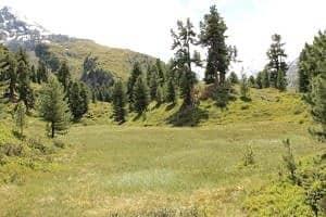 hochmoor-im-zirbenwald